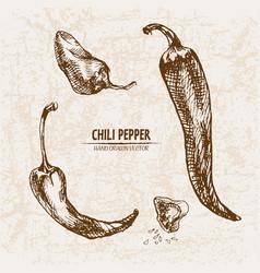 digital detailed line art chili pepeper vector image