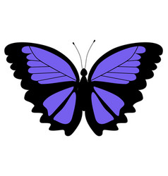 morpho butterfly vector image