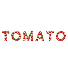 tomato word collage of tomato vector image