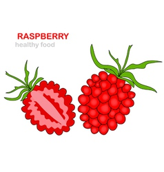 raspberry fruit vector image vector image