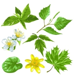 Spring green leaves and flowers Set of plants vector image vector image