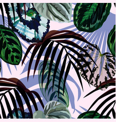 leaves monstera palm pattern vector image