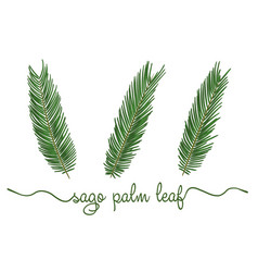 leaves sago palm elements set botany hand vector image