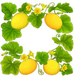 Melon frame vector