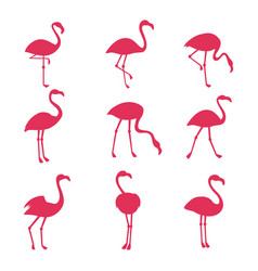 Pink flamingo silhouetes isolated on white vector