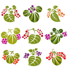 Set of green spring leaves with tendrils and vector