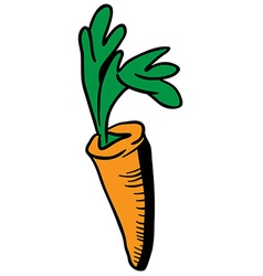 carrot vector image vector image