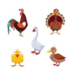 Poultry Domestic Birds Set vector image