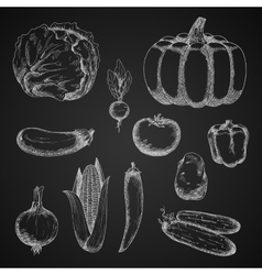Autumn farm vegetables chalk sketches vector image