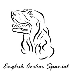 English Cocker Spaniel vector image