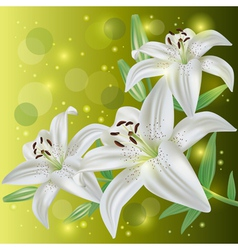 Invitation or greeting card with lily flowers vector image