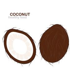 coconut fruit vector image