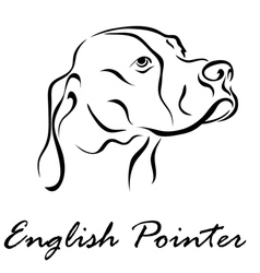 English Pointer vector image