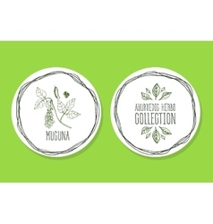 Ayurvedic Herb - Product Label with Mucuna vector