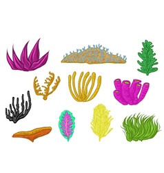 Coral set design vector