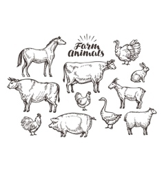 Farm sketch Collection animals such as vector