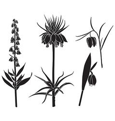 fritilaria set vector image