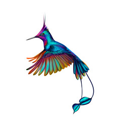 hummingbird from a splash of watercolor hand vector image