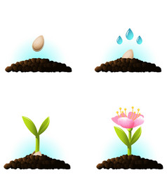 seed sprout icons vector image
