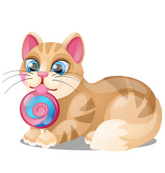 striped cat licks lollipop isolated on white vector image