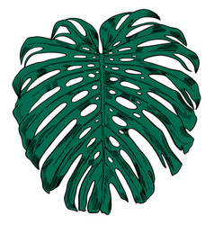 With tropical monstera leaves vector