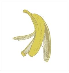 skin of a banana vector image vector image