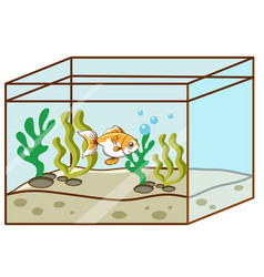 Cute goldfish swimming in tank vector