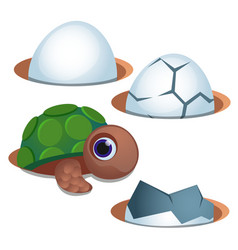 Pretty blue-eyed little turtle and cracked egg vector