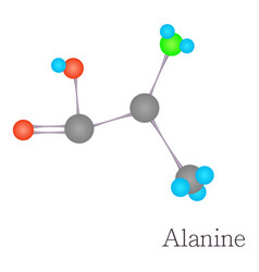 alanine 3d molecule chemical science vector image vector image