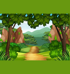 a track to the forest vector image