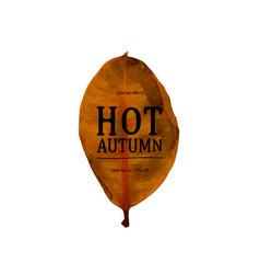 autumn sale text banner vector image