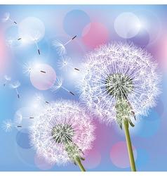 Flowers dandelions on light background vector
