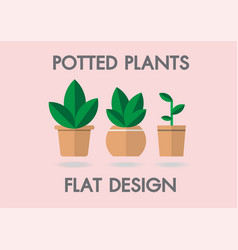 potted plants flat house vector image