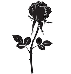 rose black vector image