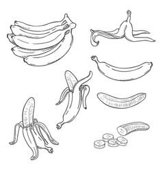 sketch set various banana vector image