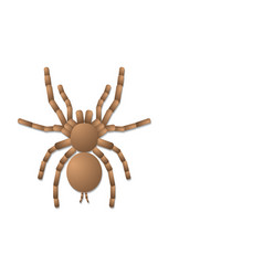 Spider tarantula on white background top view vector