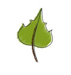 Grape leaf isolated vector