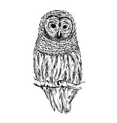 owl sketch hand drawn vector image