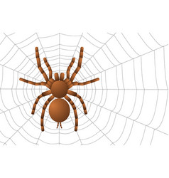 Spider tarantula on a spider web top view vector