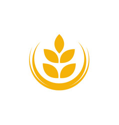 Agriculture wheat rice icon design vector