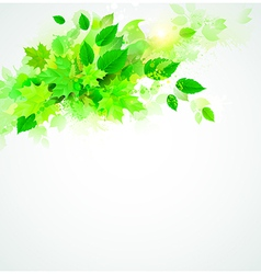 Leaves eco vector