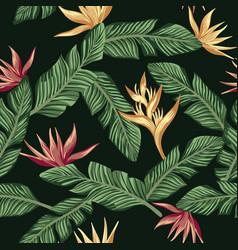 golden burgundy bird paradise strelizia leaves vector image