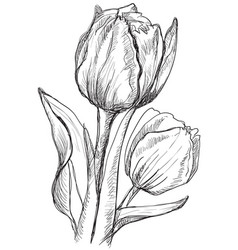 hand drawing flower 10 vector image