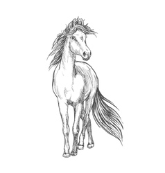 Horse standing with waving mane pencil sketch vector image