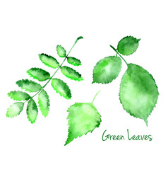 Set green abstract watercolor leaves vector