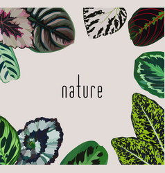 Slogan nature leaves frame vector