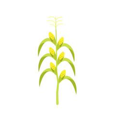 corn on stalk icon vector image vector image
