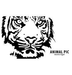 vector tiger vector image vector image