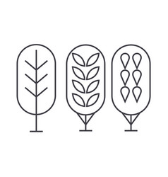 birch tree thin line icon concept birch tree vector image