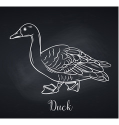 duck outline icon chalkboard style vector image
